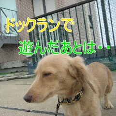 3_20101130132211.jpg