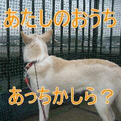 3_20101130132637.jpg
