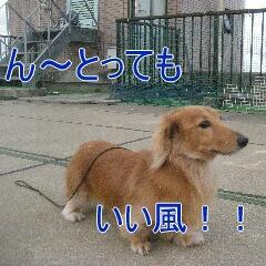 3_20101213163947.jpg