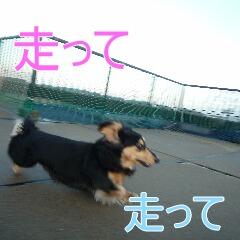 3_20101214164638.jpg