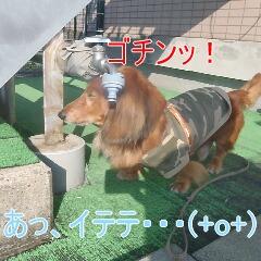 3_20110105184152.jpg