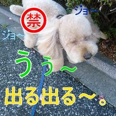 3_20110107150228.jpg