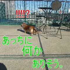 3_20110107150435.jpg