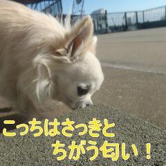 3_20110108153942.jpg