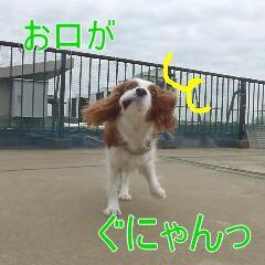 3_20110110171141.jpg