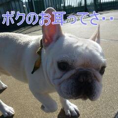 3_20110110171339.jpg