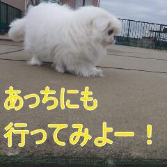 3_20110110171953.jpg