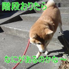 3_20110110172403.jpg