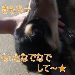 3_20110110172546.jpg