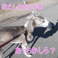 3_20110110172749.jpg