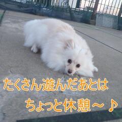 3_20110110172938.jpg
