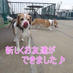 3_20110110173159.jpg