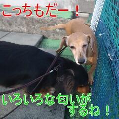 3_20110114161141.jpg