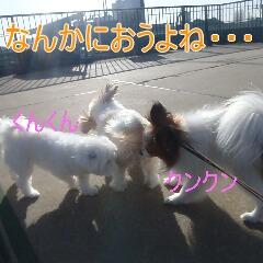 3_20110121163652.jpg
