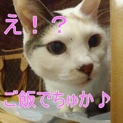 3_20110121164247.jpg