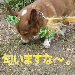 3_20110126153855.jpg