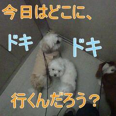 3_20110126154326.jpg