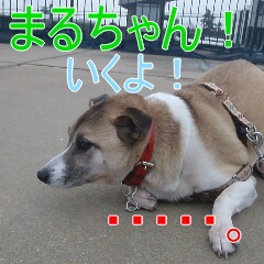 3_20110128111143.jpg