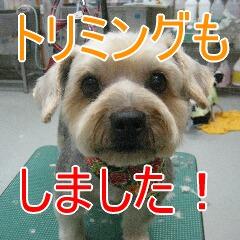 4_20100324184252.jpg