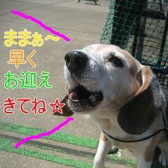 4_20100603153311.jpg