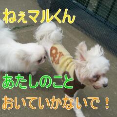 4_20100609123043.jpg