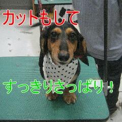 4_20100614114614.jpg