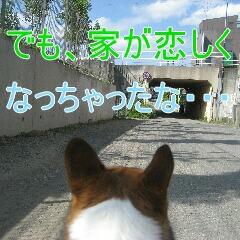 4_20100710192217.jpg