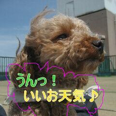 4_20100712141410.jpg