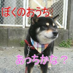 4_20100713184500.jpg