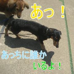 4_20100714151152.jpg