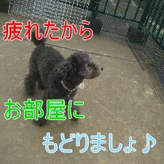 4_20100714151850.jpg