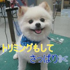 4_20100714152127.jpg