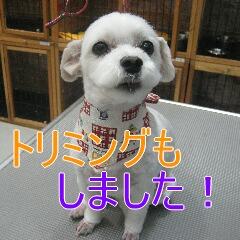 4_20100716154853.jpg