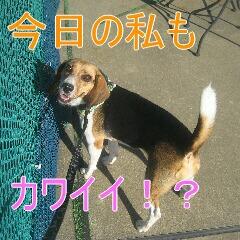 4_20100823162027.jpg