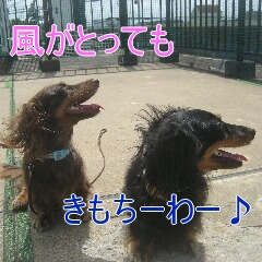 4_20100902163333.jpg