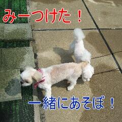 4_20100902163824.jpg