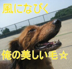 4_20100904181453.jpg