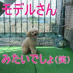 4_20100904183057.jpg