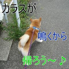 4_20100904185222.jpg