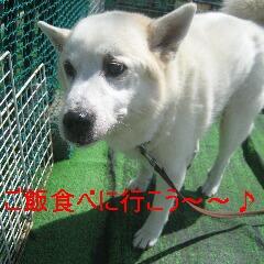 4_20100905163359.jpg