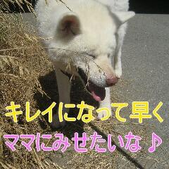 4_20100905164949.jpg
