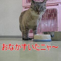 4_20100905165308.jpg