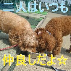4_20100905170325.jpg