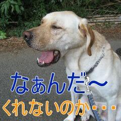 4_20100905172105.jpg