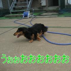 4_20100905172911.jpg