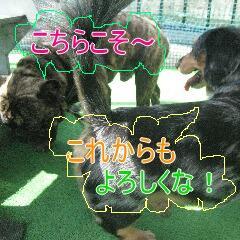 4_20100911171522.jpg