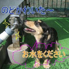 4_20100916162034.jpg