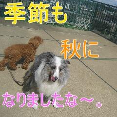 4_20101002195952.jpg