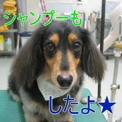 4_20101005155349.jpg