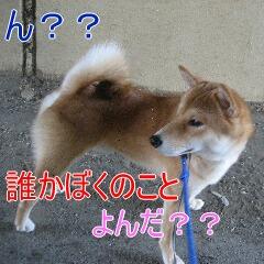 4_20101019165747.jpg